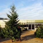 Grote Kerstboom